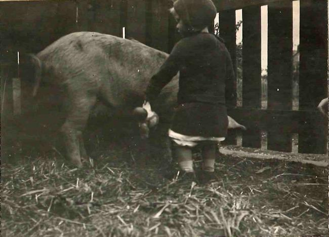 "Keeping pigs for the war effort, 1914-1918 Edith Gardiner writes, 'The fiat had gone forth! We were to keep pigs. Had not the Board of Agriculture pronounced the disirability of true patriots' keeping animals for food? Our new house was almost ready for us, and the garden, as yet unplanted, would surely provide much for the sustinance of ""food"" animals...'' (From 'War Notes on the keeping of pigs', Gardiner Collection, Wolfson College Archives)"