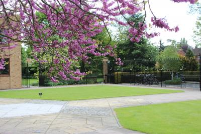 Judas Tree and front court