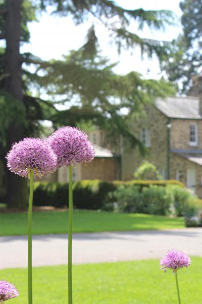 Alliums by Tom Laws