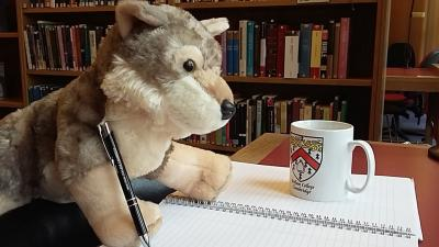 Virginia the stuffed wolf working at a desk